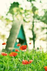 One Day On Poppy Hill by BlackJack0919