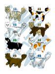 CAT ADOPTS