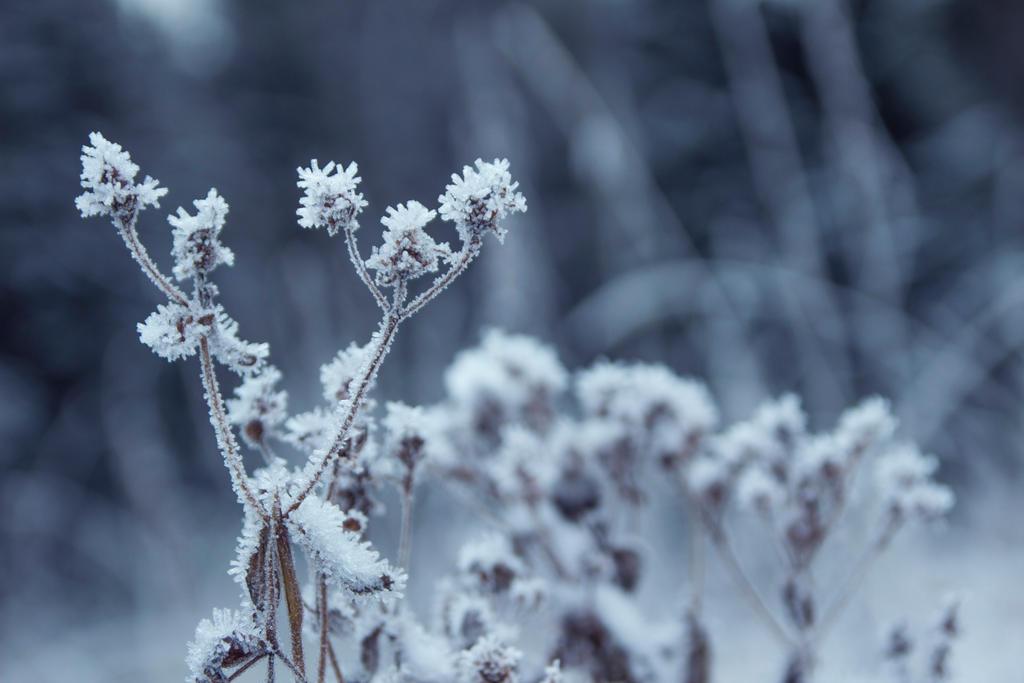 Sprinkle of Snow by FridaSort on DeviantArt