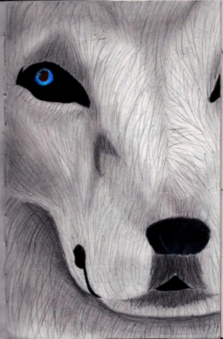 My Contest Piece Against Zawolfz c: by xXThePurbloodAlphaXx