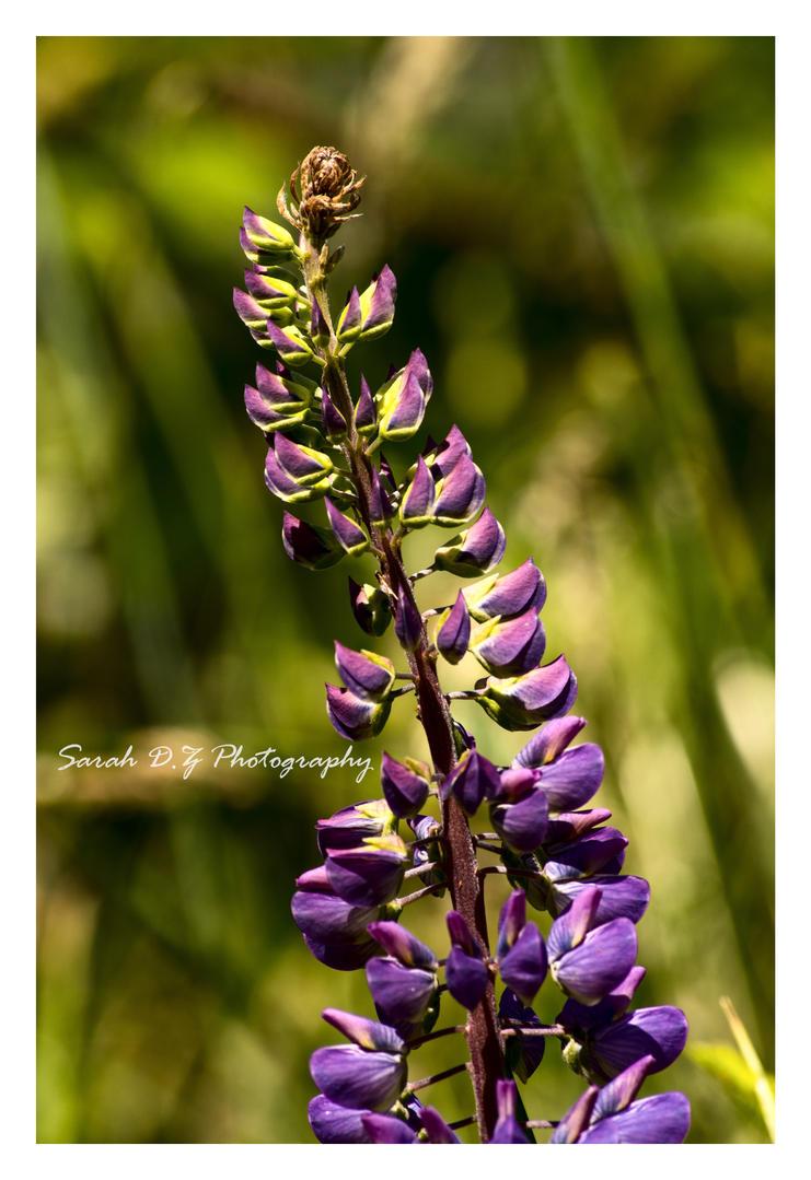 Purple Staff 2 by LadySarah