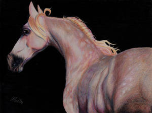 Rose Grey Arabian Horse