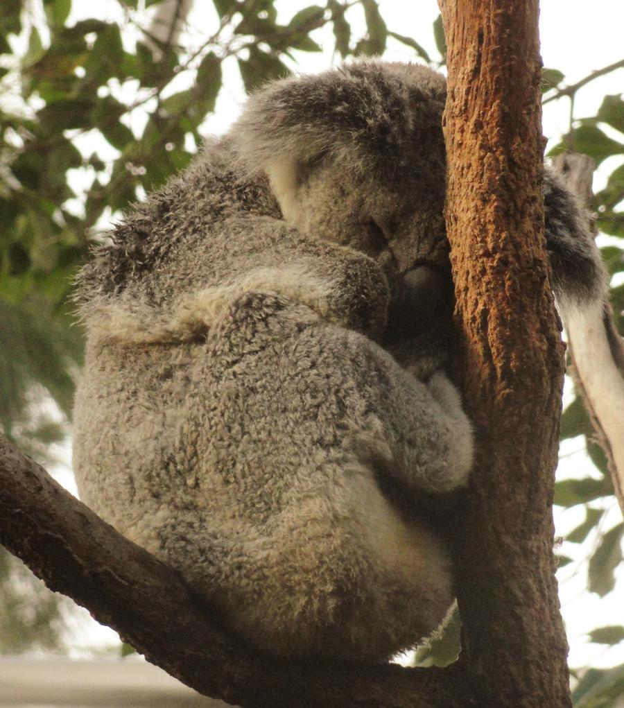 Sleep Tight by Ssargasm