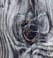 Wood Eye IV by Delia-Stock