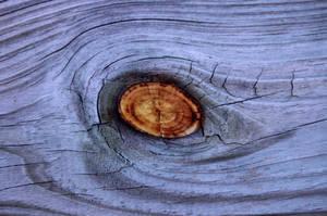 Wood Eye V by Delia-Stock