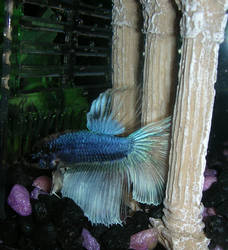 Greek Fish Revivalism