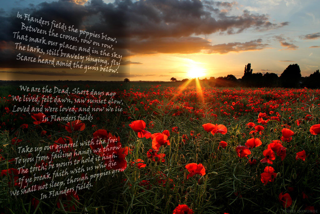 In Flanders Fields by TheMassiveQuasar on DeviantArt