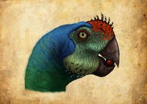 ovirraptor parrot