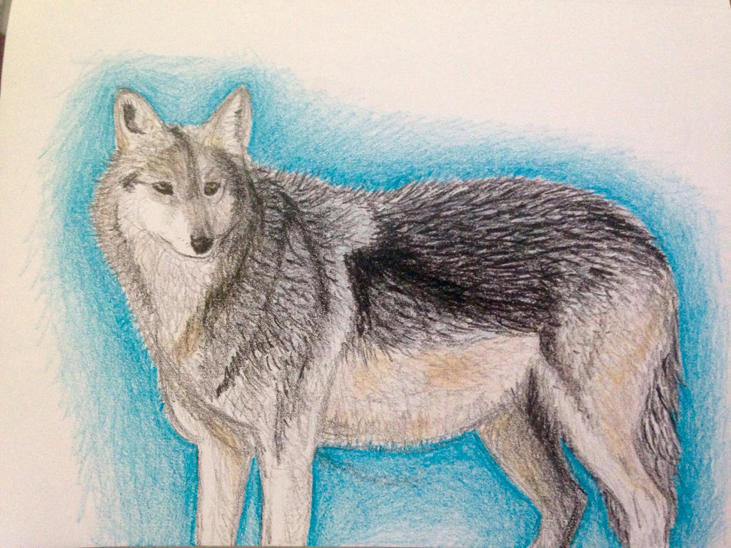 Wolf/crayon by Sagefire0709