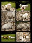 Plushie: Albus the Arctic Fox