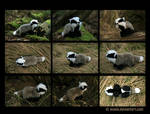 Plushie: Bailey the Baby Badger