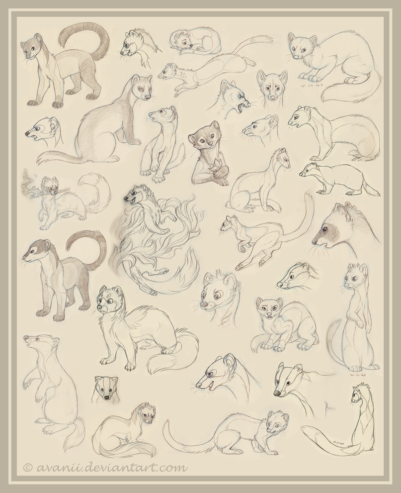 Sketchdump: Mustelids by Avanii