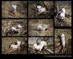 Plushie: Macchia the Ferret