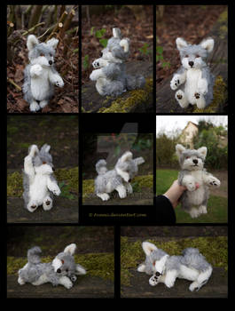 SOLD Plushie: Coinin the Wolf Teddy