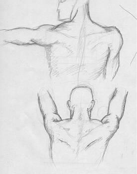 Estudio anatomico