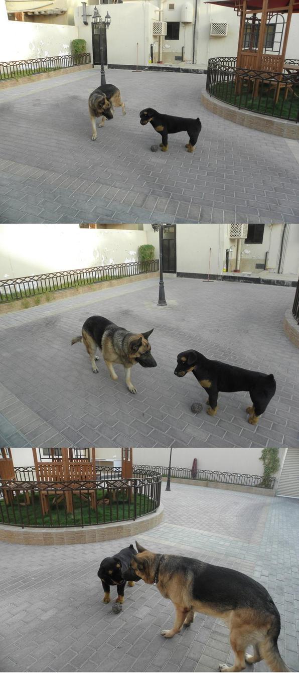 New Dog ? by sinako777