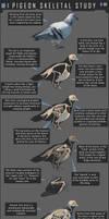 Pigeon Skeletal Study