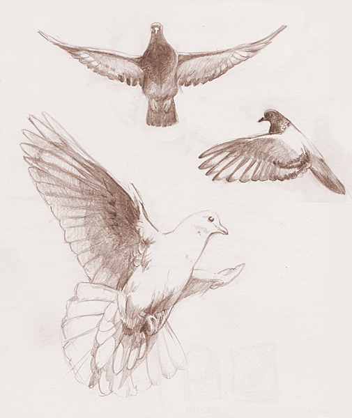 flying dove pencil drawing - photo #2