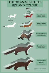 Chart of European Mustelids: Size and Colour by redwattlebird