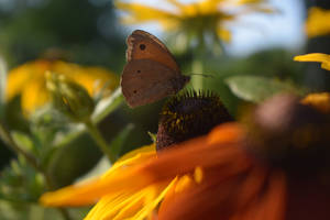 Butterfly 1 by YunaAnnPhotography