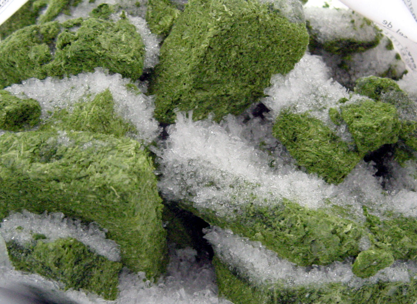 Should You Freeze Your Weed? #4C5E28