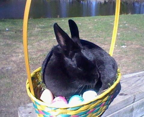 bunny 2 by Ashfur15
