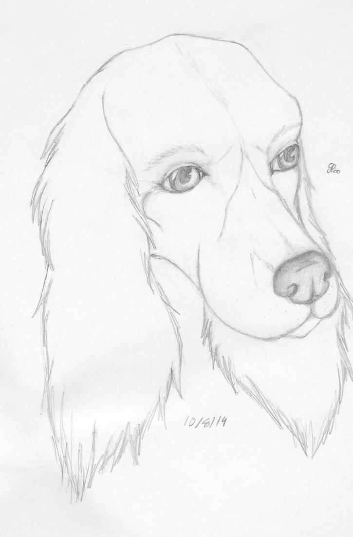 Just a Dog by Ashfur15