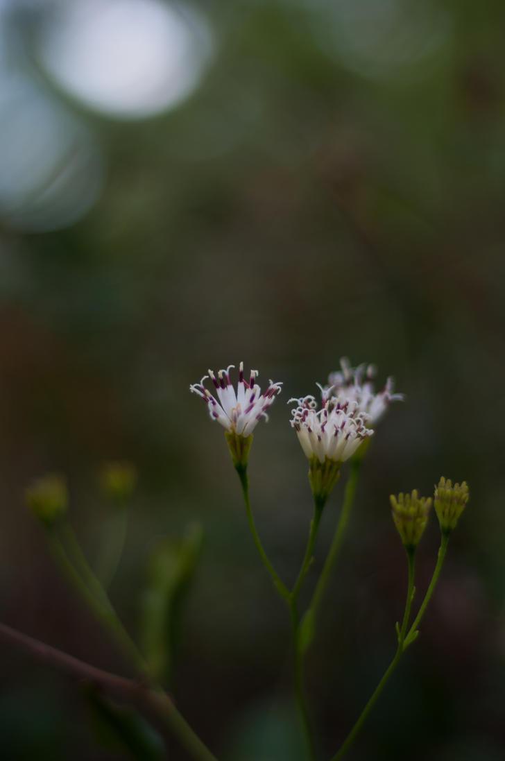 Flower by rawrkaleigh