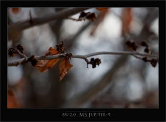 2013-04-06 Uk Arboretum Jupiter 9-17 Framed