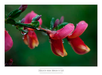 2013-04-28 Helios 44m 58mm F2-11 Framed by istarlome