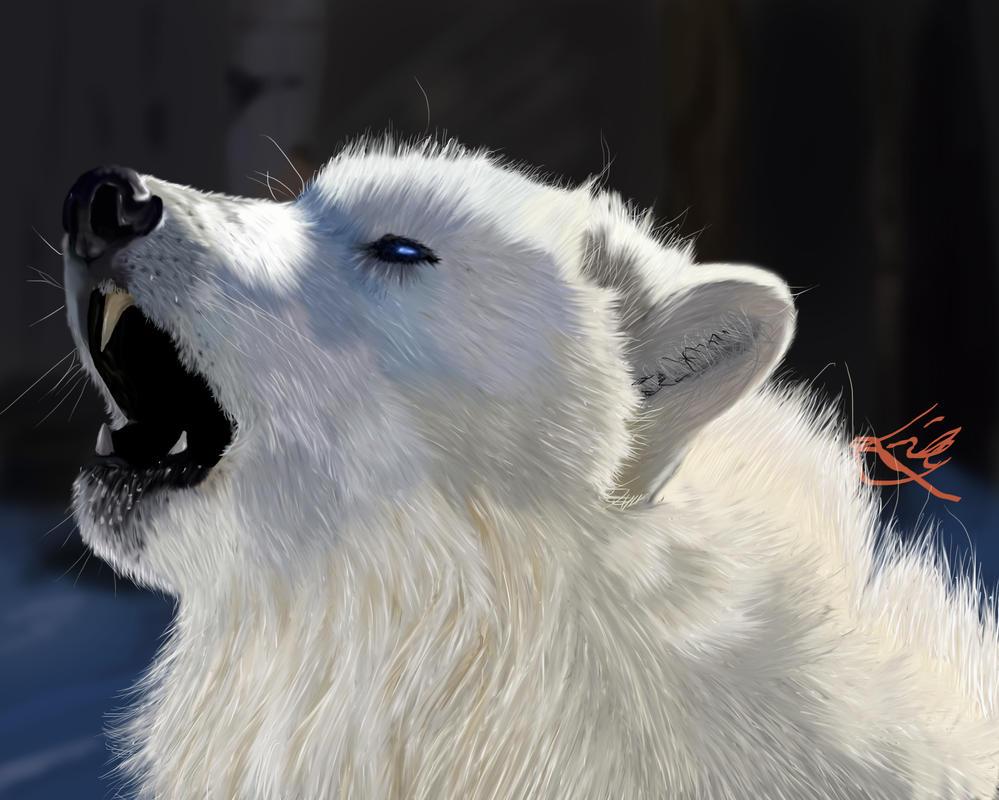 beautiful blue white wolf - photo #38