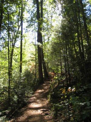 Pathway by larissa-stock