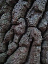Bark texture by larissa-stock