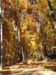 Autumn leaves by larissa-stock