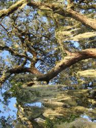 Oak tree 3 by larissa-stock