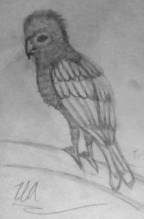 Exotic Bird Sketch By Esvandetta On DeviantART