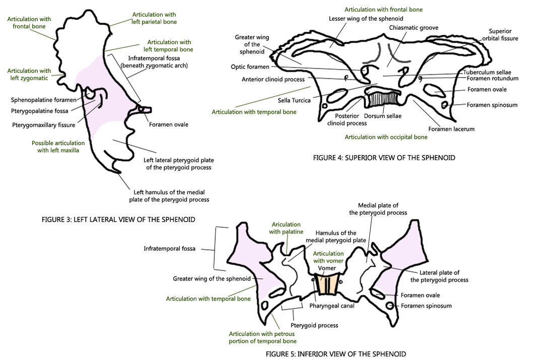 Them Other Views of Sphenoid by Colourblind-Crayon on DeviantArt