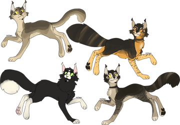 FREE BC Family Tryouts/Adopts 4/4 Windclanners