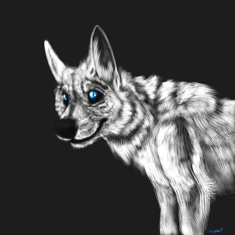 Gray wolf blue eyes