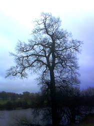 Mote Park 13 - The mighty oak