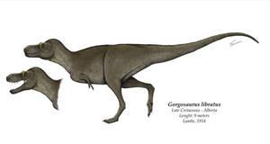 Gorgosaurus libratus reconstruction