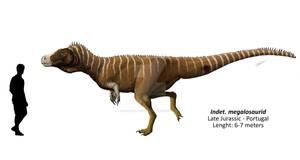 Indeterminate megalosaurid from Lourinha
