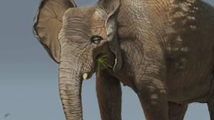 Loxodonta africana digital painting