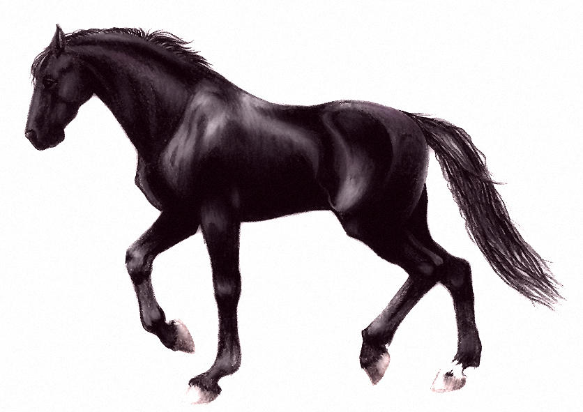 history of the horse equus caballus essay History of the horse, evolution of the horse from eohippus to the oldest breed of horse, primitive wild horses including prezewalski horse, forest horse, tarpan, and tundra horse.