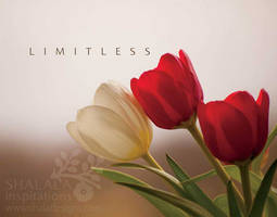 limitless by shaladesigns