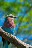 rainbow bird by shaladesigns