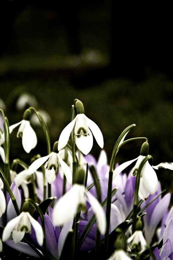 CVECE Spring_by_momo_photography2
