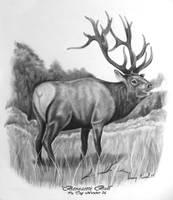 Benezette Pa bull by kissel71