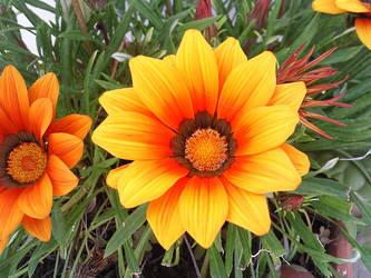 Orange Flower by Sweet83