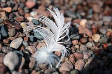 Lakeside Feather